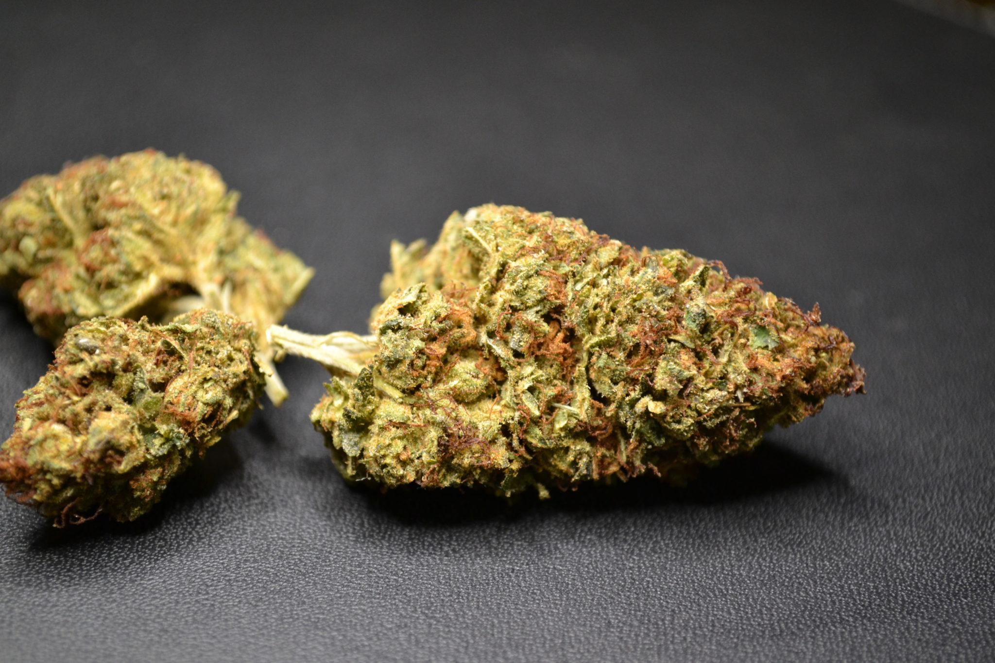 Marijuana On Mt Hood